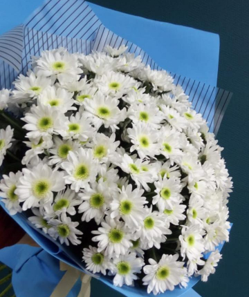 Букет из белоснежных кустовых хризантем - 21 шт